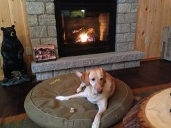 bailey in front of fireplace