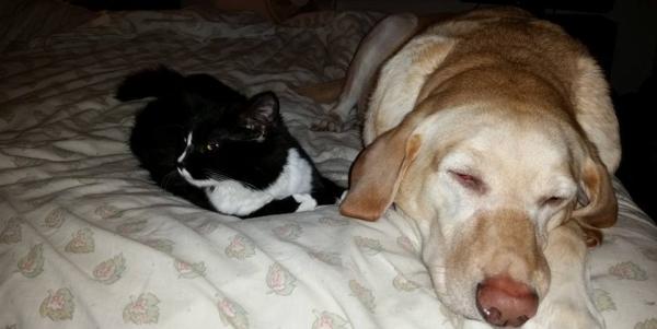 bailey-sleeping-with-aubrey.jpg