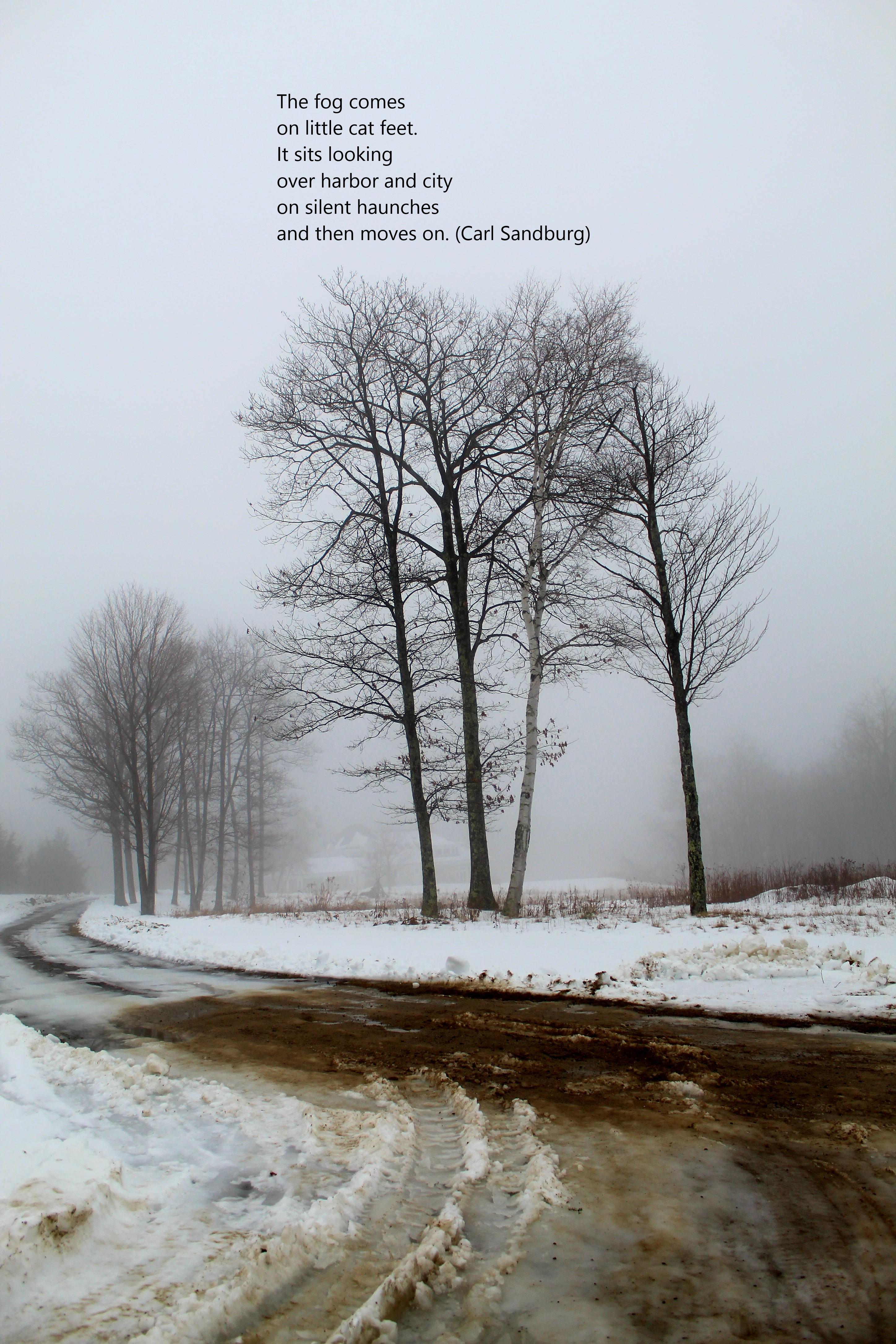 the fog 3
